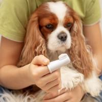 Higiene para perros y gatos